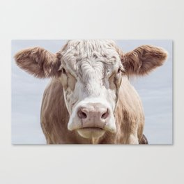Animal Photography | Cow Portrait Colour | Minimalism | Farm Animals Canvas Print