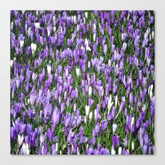 nature in lilac Canvas Print