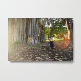 Swinging Banyan Metal Print