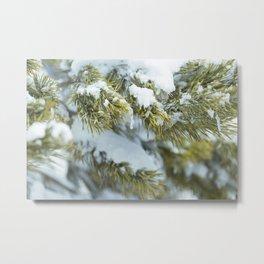 Winter's Pine 8 Metal Print