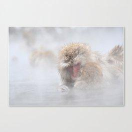 The Snow Monkeys of Jigokudani Yaen-Koen. Canvas Print