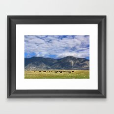 Field of Cows Framed Art Print