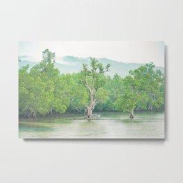 Mangrove forest scenery  Metal Print