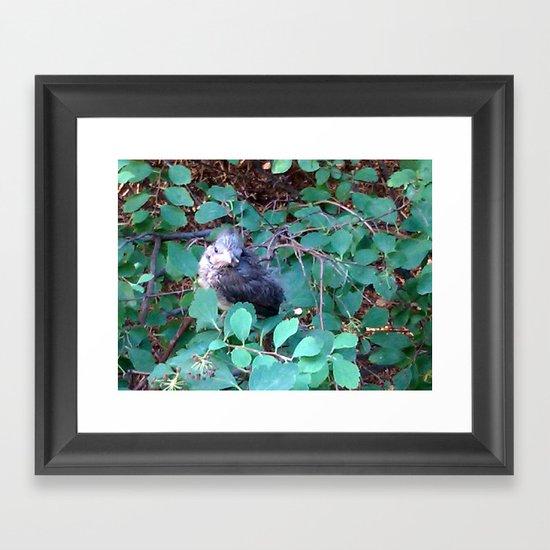Regal Runt Framed Art Print