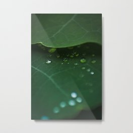 Fresh Morning Dew Metal Print