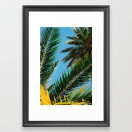 Florida Palm Trees Framed Art Print