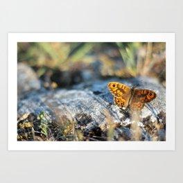 Beautiful orange-black colored butterfly Art Print