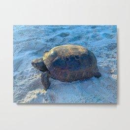 Florida Gopher Tortoise Metal Print