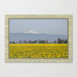 DAFFODIL FIELD AND MOUNT BAKER IN THE SKAGIT VALLEY  Canvas Print