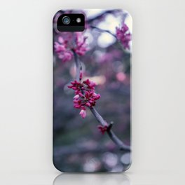 Blossoming pink tree macro image close-up iPhone Case