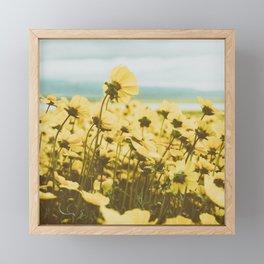 Sunlight Yellow Daisy Garden with Blue Sky Framed Mini Art Print