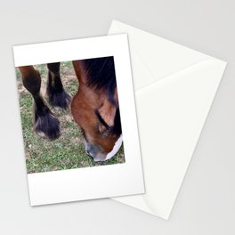 Clydesdale Nibbling Grass Stationery Cards