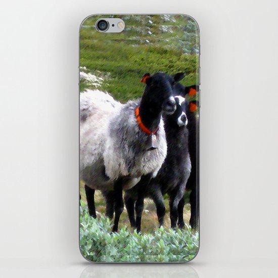 mountain sheep iPhone & iPod Skin