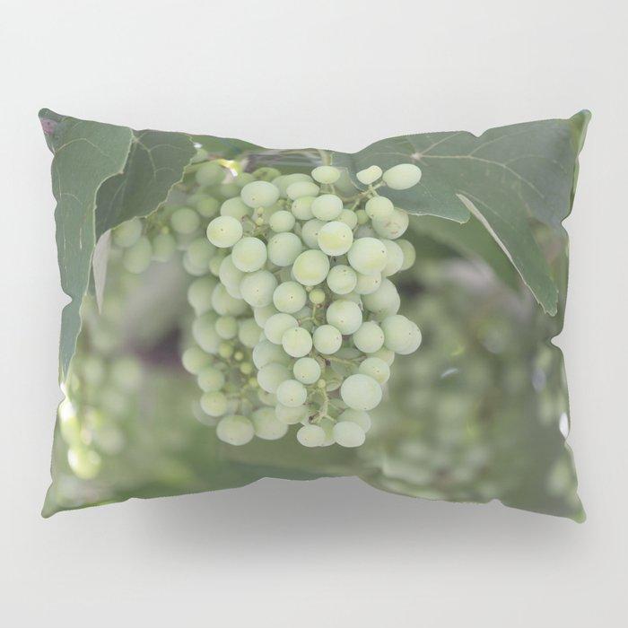 grape grows on vineyard in spring Pillow Sham