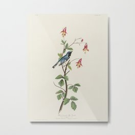 Black-throated Blue Warbler from Birds of America (1827) by John James Audubon etched by William Hom Metal Print