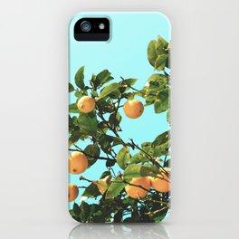 Summer Orange Tree iPhone Case