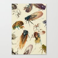 bug Canvas Prints featuring summer cicadas by Teagan White