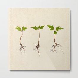 Maple Seedlings on Vintage Paper Metal Print