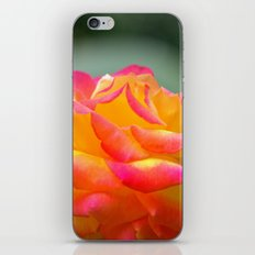 Rose 2138 iPhone & iPod Skin