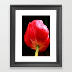 Passion and Tulips Framed Art Print