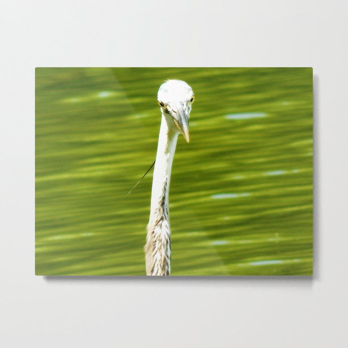 Looking at me? Metal Print