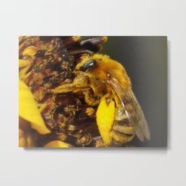 Bumblebee on a Sunflower Metal Print