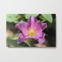 One Wild Rose Metal Print