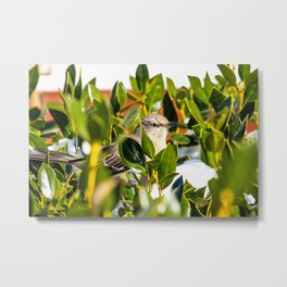 bird in bush Metal Print