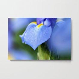Dwarf Iris Metal Print