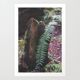 Plant and Bark Art Print