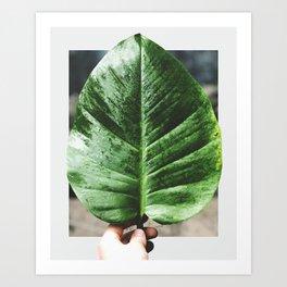 Rainforest Flora Art Print
