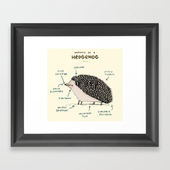 Anatomy of a Hedgehog Gerahmter Kunstdruck