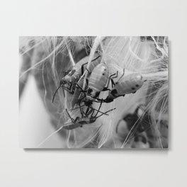 bugs on a seedpod Metal Print