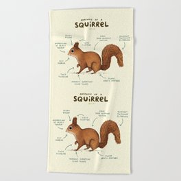 Anatomy of a Squirrel Beach Towel