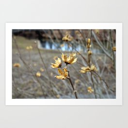 Flowers in the Winter Art Print