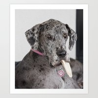 great dane Art Prints featuring Great Dane by Deborah Janke
