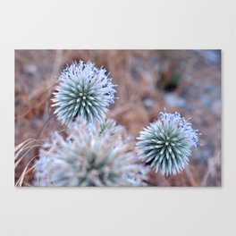nature tint Canvas Print