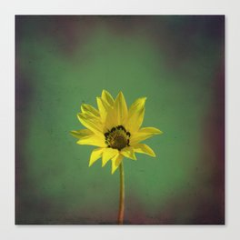 The yellow flower of my old friend Canvas Print