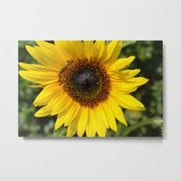 """""""Happy Face"""" Sunflower, Flower Photography Metal Print"""