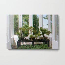 Bonsai Window Metal Print