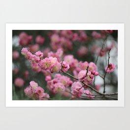 Love Like Cherry Art Print
