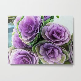 Ornamental cabbage flower. Sirenity Metal Print