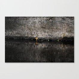 The little anatinae Canvas Print