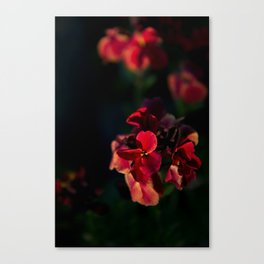 Merisi Canvas Print