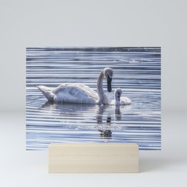 Cygnet with Mother Mini Art Print