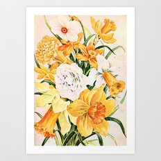 Wordsworth  and daffodils. Art Print