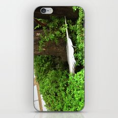 Feather In Green iPhone & iPod Skin