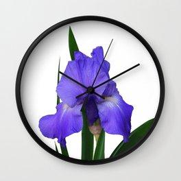 Iris 'Sea Master' Wall Clock