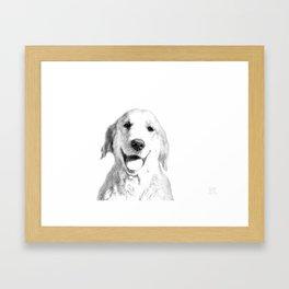 Amber // Golden Retriever Framed Art Print