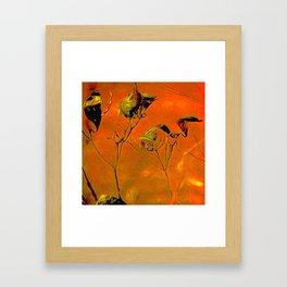 Dry Pods Framed Art Print